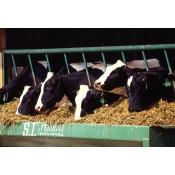 Feirmeoireacht - Farming (2)