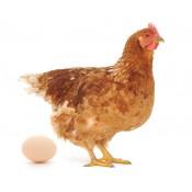 Egg Producers and Distributors (2)